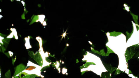 sunlight through the leaves Stock Video Footage