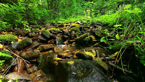 mountain stream in the forest Live Action