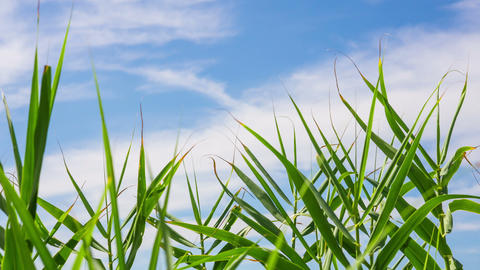 Grass and Cloud Timelapse Stock Video Footage