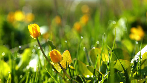 spring Footage
