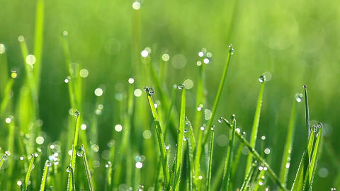 drops of dew on a green grass Stock Video Footage