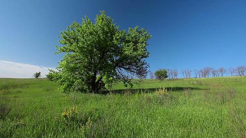 summer landscape Footage