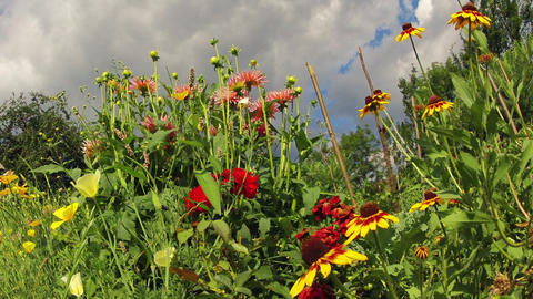 flowers against a cloudy sky. timelapse Stock Video Footage