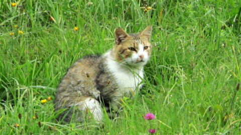 Cat In The Green Grass stock footage