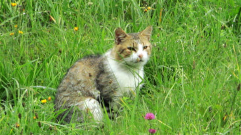 cat in the green grass Stock Video Footage