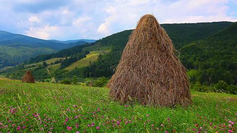 summer landscape with hut Footage