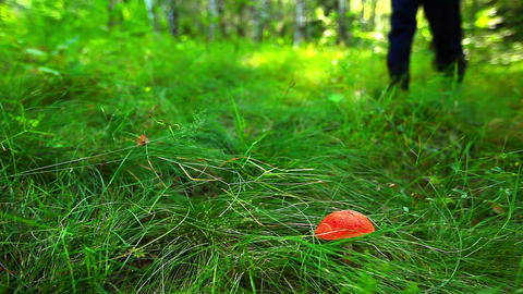 mushroom in green grass Footage