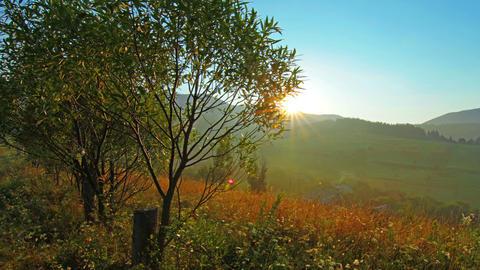 summer landscape - morning Stock Video Footage