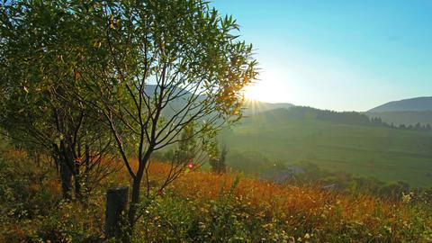 summer landscape - morning Footage