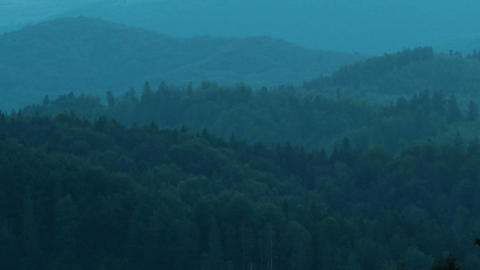 forest Stock Video Footage