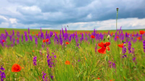 field of flowers and the cloudy sky Stock Video Footage