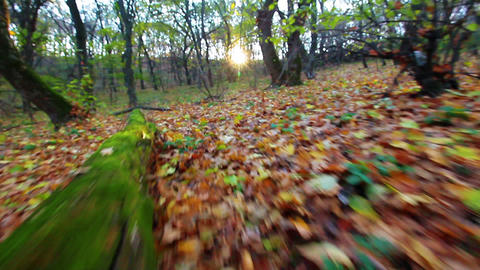 a walk is in the autumn forest Stock Video Footage