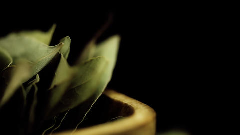 HD macro footage bay leaves background Footage