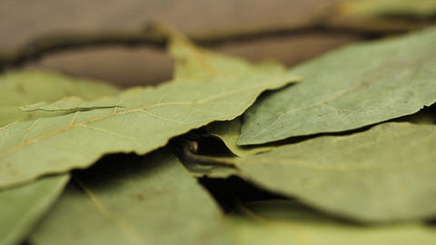 HD macro footage bay leaves background Stock Video Footage