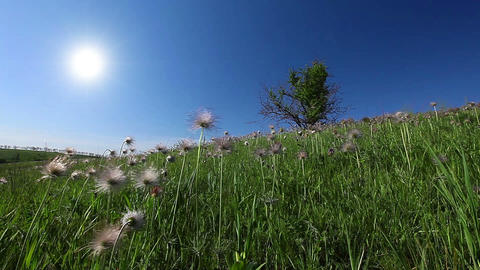 summer landscape Stock Video Footage