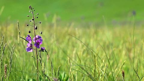 spring flowers Stock Video Footage