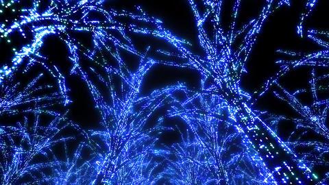 illumination tree neon Aa 3 HD Stock Video Footage
