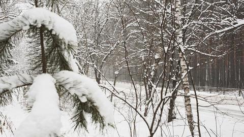 Snow Blizzard Footage