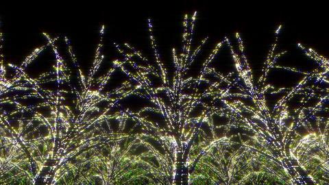 illumination tree neon C 1 HD Stock Video Footage