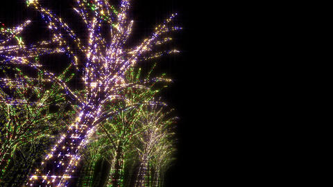 illumination tree neon D 2 HD Stock Video Footage