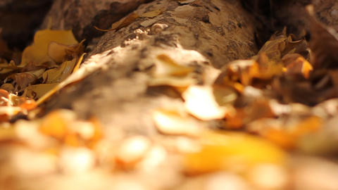 Autumn Yellow, orange and red leaves in beautiful Stock Video Footage
