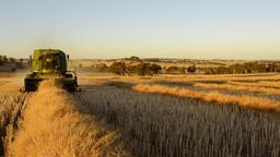Harvest 03 HD Stock Video Footage