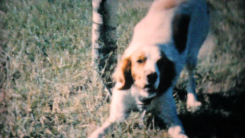 Happy Dog Wants To Play 1962 Vintage 8mm film Footage