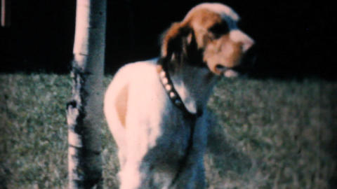 Happy Dog Wants To Play 1962 Vintage 8mm film Stock Video Footage