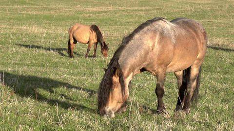 Horse in the Sun Stock Video Footage