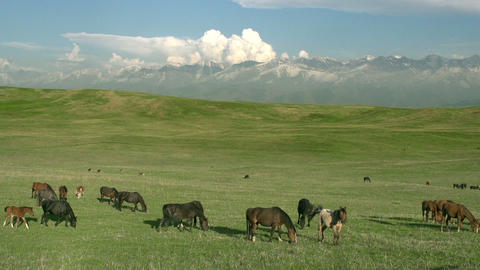 Pasture in the foothills Stock Video Footage