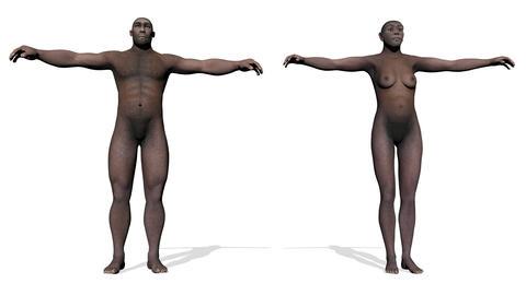Homo erectus - 3D render Animation