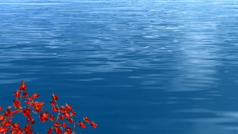 red maple leaves and blue lake water Animation