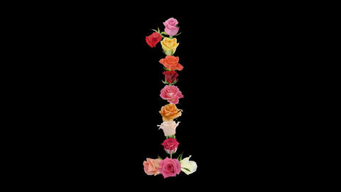 Montage opening rainbow roses number 1 shape alpha matte 1n Stock Video Footage