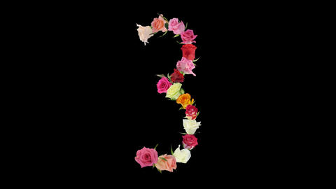 Montage opening rainbow roses number 3 shape alpha matte 3n Stock Video Footage