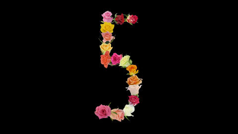 Montage opening rainbow roses number 5 shape alpha matte 5n Stock Video Footage