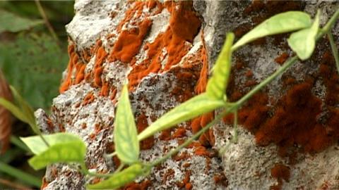 ntsc close up stone Stock Video Footage