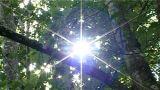 Ntsc Natural Shining Sun stock footage