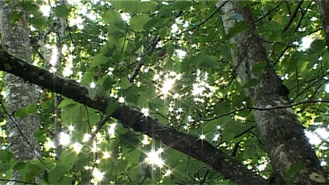 ntsc natural shining sun Stock Video Footage