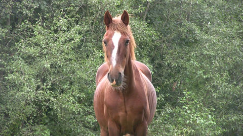 Horse in a pasture 2 Stock Video Footage