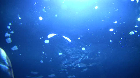 Lots of fish are swimming amidt the backlit water Stock Video Footage