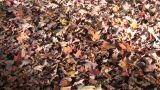 Autumn Leaves Rest On The Ground In The Sunlight (High Definition) stock footage