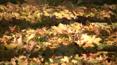Autumn leaves rest on ground in the sunlight (High... Stock Video Footage