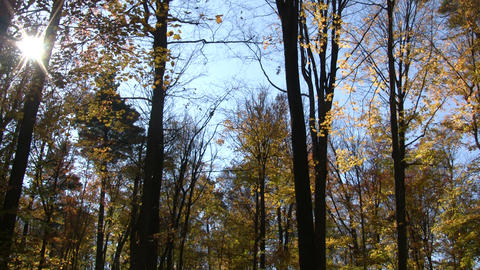 Beautiful autumn scenic of the fall foliage (High... Stock Video Footage