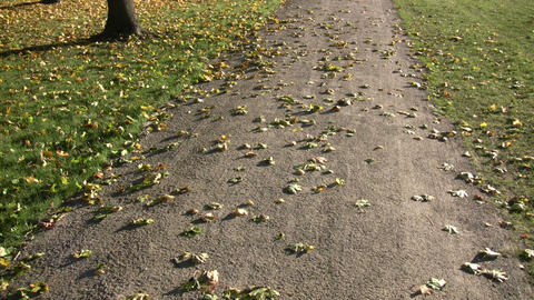Autumn leaves rest on a trail in the sunlight (High Definition) Live Action