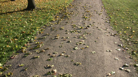 Autumn leaves rest on a trail in the sunlight (High... Stock Video Footage