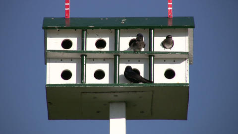 Birds are hanging out in bird feeder hotel (High Definition) Footage