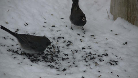 Birds are viciously fighting over the seed territory... Stock Video Footage