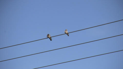 Pigeons Sitting on a Wire 1 (High Definition) Stock Video Footage