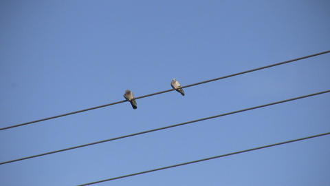 Pigeons Sitting on a Wire 1 (High Definition) Footage