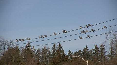 Birds Sitting on a Wire 3 (High Definition) Stock Video Footage